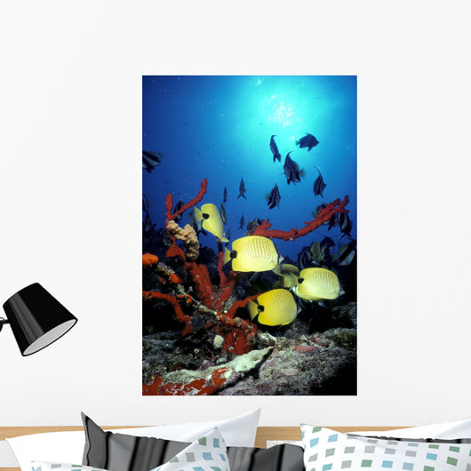 Backlit Fish By Sunburst A83E Wall Mural