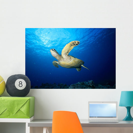 Hawaii, Green Sea Turtle Swims Near Surface B1942 Wall Mural