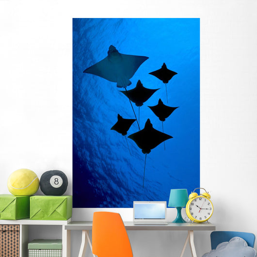 [Dc] Galapagos, Six Spotted Eagle Rays View From Below B1924 Wall Mural