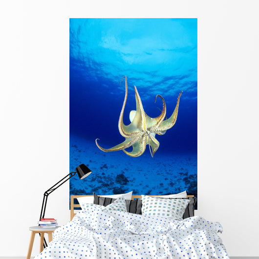 Hawaii, Day Octopus Midwater With Sunburst, Underside B1935 Wall Mural