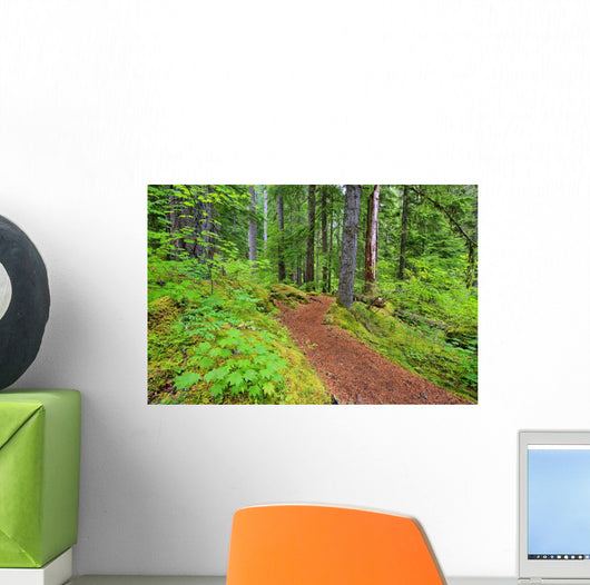 Trail To Proxy Falls In Willamette National Forest Wall Mural