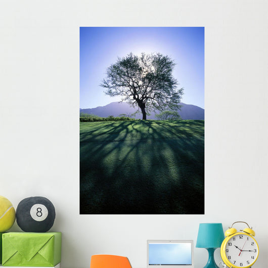 Silhouette Of Tree On Grassy Knoll, Mountain In Background B1628 Wall Mural