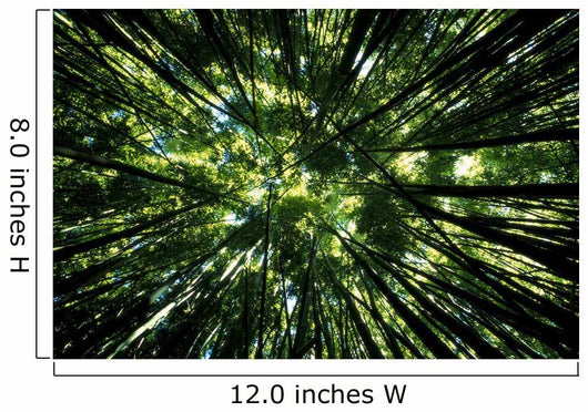 Hawaii, Bamboo Tree Forest, View Upward Toward Treetops B1625 Wall Mural