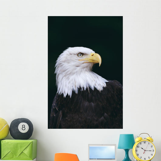 Alaska, Tongass National Forest, Bald Eagle Close-Up Portrait Wall Mural