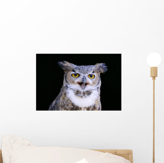 Great Horned Owl Portrait B1660 Wall Mural