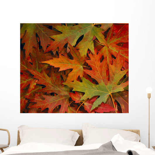 Maple Leaves In Autumn Colors, Background B1624 Wall Mural