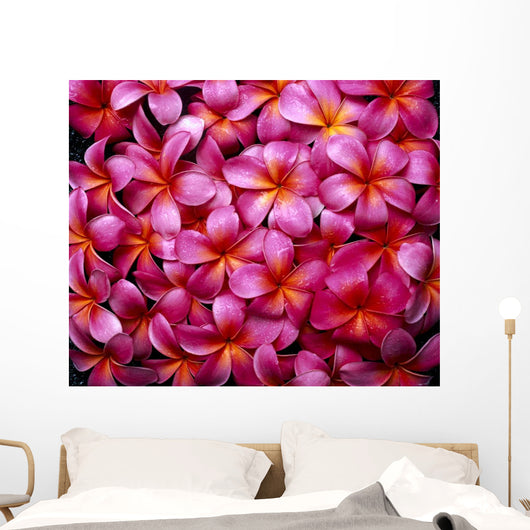 Flowers Pink Plumeria Frangipani, Background B1595 Wall Mural