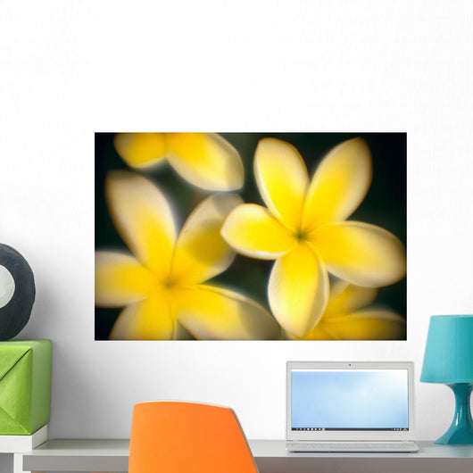 Close-Up Of Yellow Plumeria Flowers Soft Focus B1596 Wall Mural