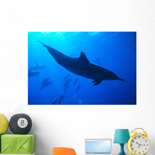 Spinner Dolphins Underwater, One Close-Up B1876 Wall Mural