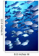 Hawaii, Schooling Bigeye Jacks B1903 Wall Mural