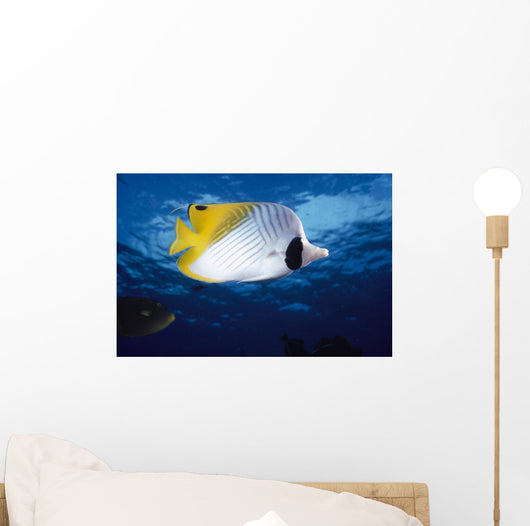 Hawaii, Maui, Threadfin Butterfly Fish, Close-Up, B1900 Wall Mural