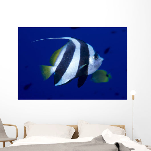 Hawaii, Pennant Butterflyfish Side View B1937 Wall Mural