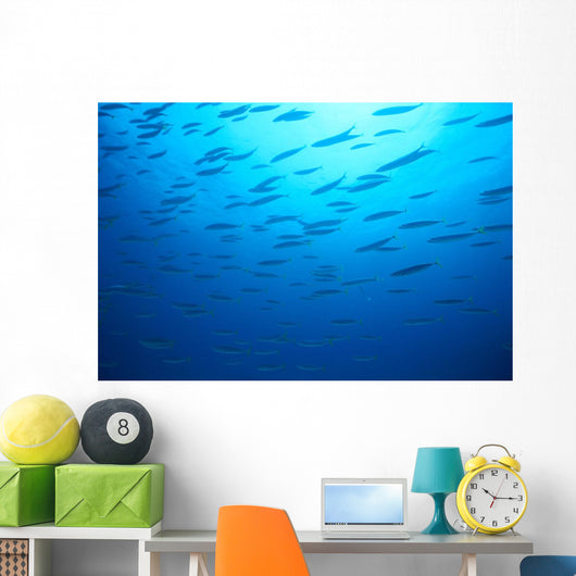 Hawaiian Reef Fish Silhouetted At Surface With Sunburst B1939 Wall Mural