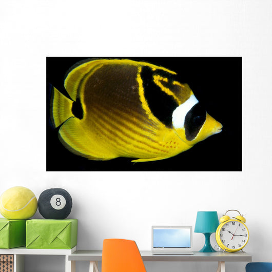 Hawaii, Raccoon Butterflyfish Close-Up B1936 Wall Mural