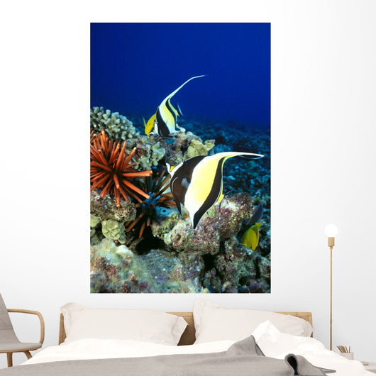 And Reef Fish C1959 Wall Mural
