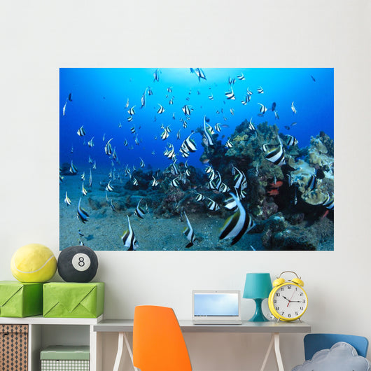 Hawaiian Reef Scene With Pennantfish C1950 Wall Mural
