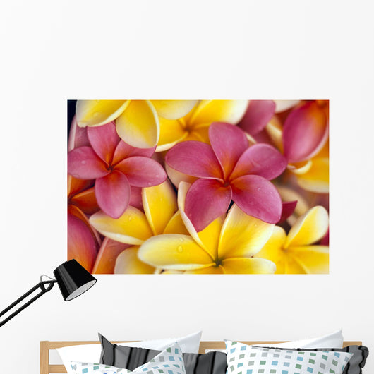 Close-Up Of Yellow And Pink Plumeria Flowers C1662 Wall Mural