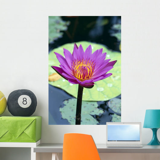 Single Water Lily Blossom Wall Mural