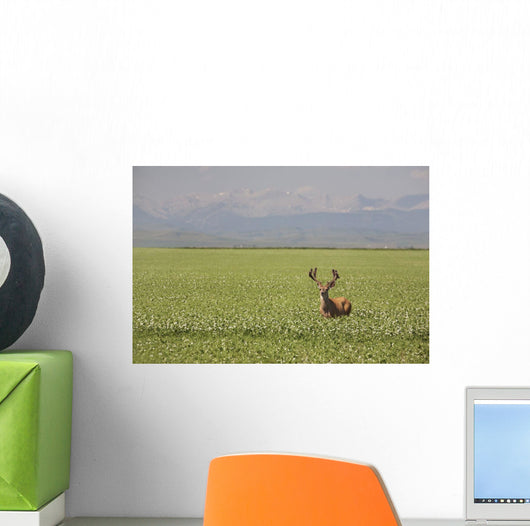 Male Deer With Antlers Wall Mural