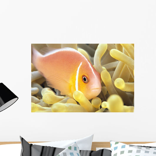 Close-Up Of Pale Orange Anemonefish In Anemone Wall Mural