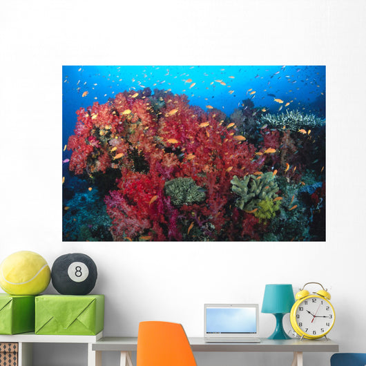 Colorful Reef Scene With Alcyonarian Coral, School Of Anthias Wall Mural