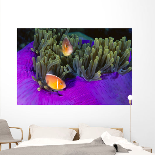 Malaysia, Anemonefish And Anemone Pair Wall Mural