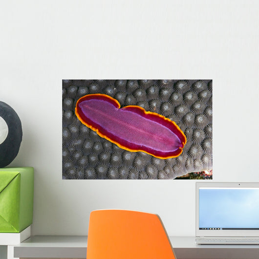 Fiji, Lau Islands, Flatworm Pink With Red And Yellow Around Edge Wall Mural