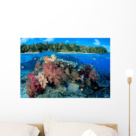 Fiji, Over/Under Reef Scene, Angelfish, Pygoplites Diacanthus Wall Mural