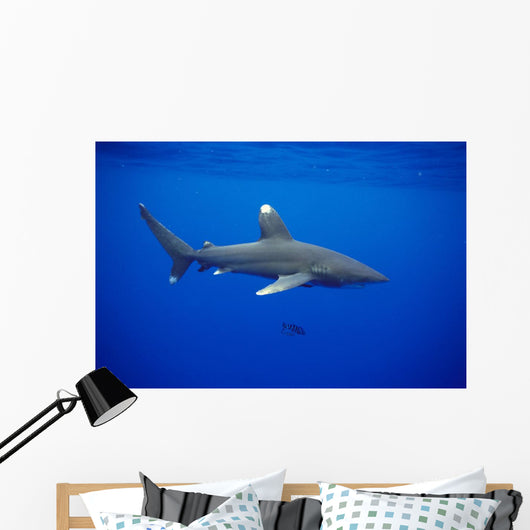 Hawaii, Oceanic Whitetip Shark Side View C2044 Wall Mural