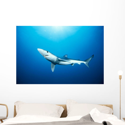 California, Blue Shark Clear Blue Water, Sunburst Wall Mural