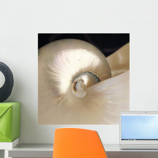 Extreme Close-Up Nautilus Shell Iridescent Color Texture Shiny Wall Mural