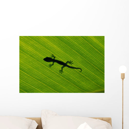 Hawaii, Silhouette Of Gecko Through Leaf Of Banana Plant Wall Mural