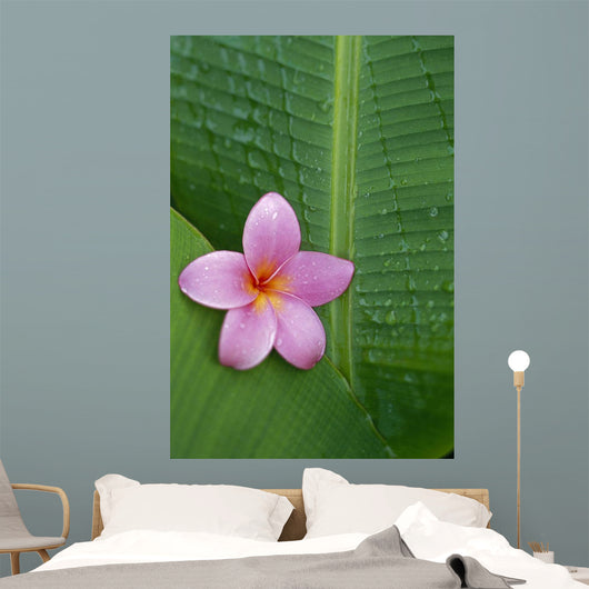 Pink Plumeria Flower On Banana Leaf, Raindrops Detail Wall Mural