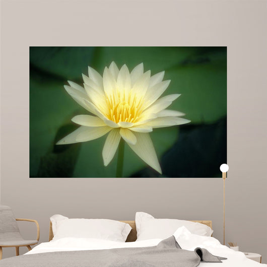 Close-Up Of One White Lily Blossom In Pond, Green Leaves Background Wall Mural