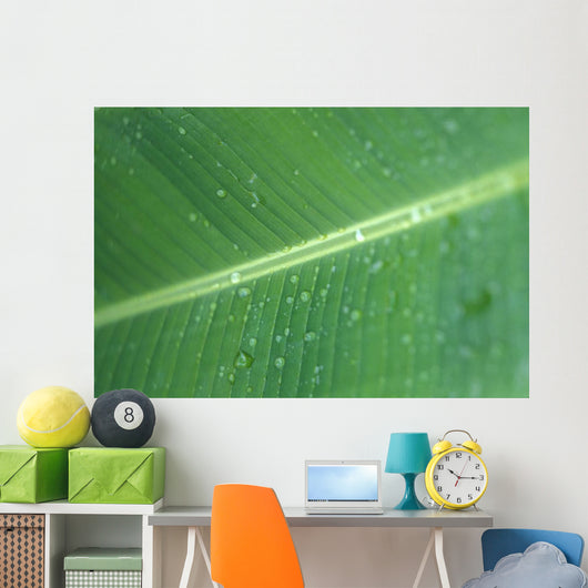 Close-Up Detail Green Banana Leaf With Droplets Of Water, Dew Wall Mural