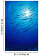 Micronesia, School Blackfin Barracuda, Silhouetted By Sunburst Wall Mural