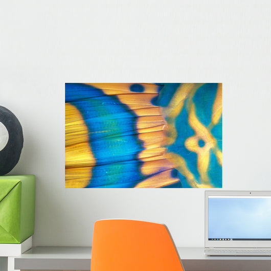 Micronesia, Extreme Close-Up Bicolor Parrotfish Tail Fin Scale Detail Wall Mural