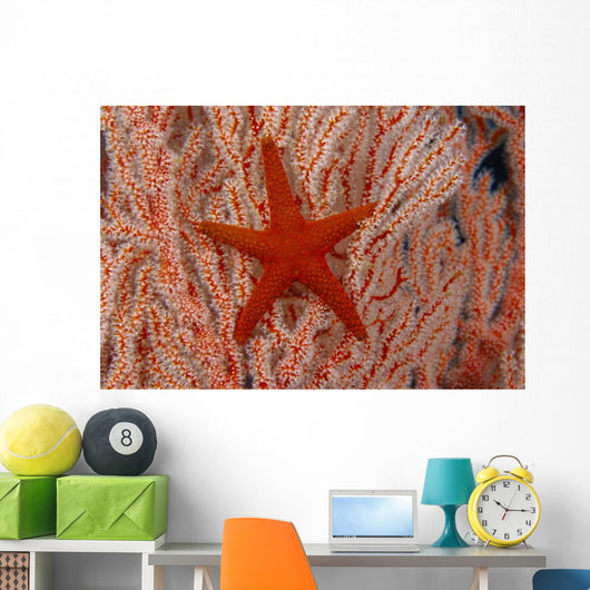 Thailand, Sea Star Aka Starfish Gorgonian Coral Red And White Wall Mural
