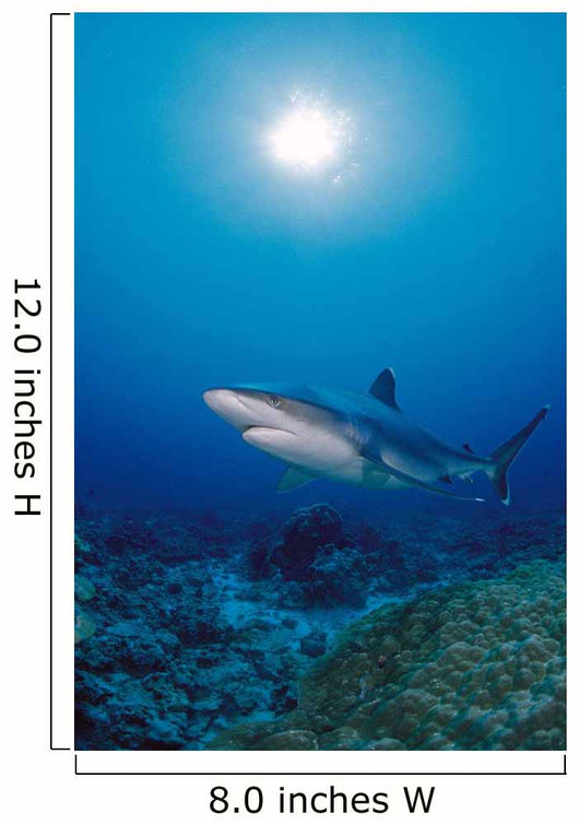 Thailand, Silvertip Shark Over Reef, Sunburst Wall Mural