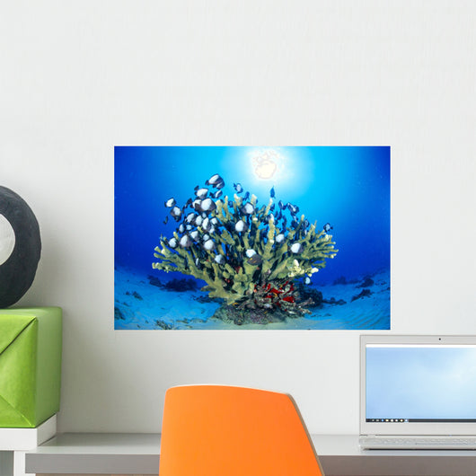 Hawaiian Reef Scene With Antler Coral And Reef Fish, Sunburst Wall Mural