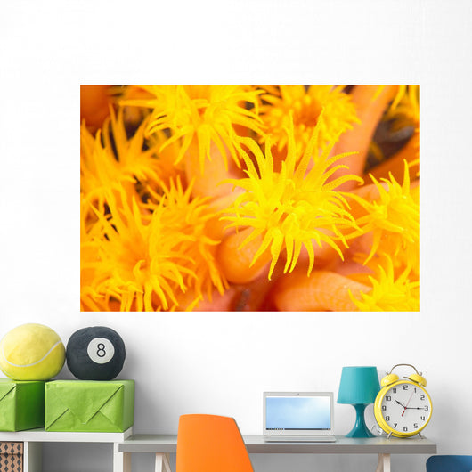 Hawaii, Yellow Soft Coral, Cup Coral, Close-Up Detail Wall Mural