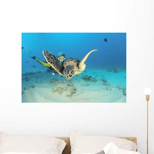 Hawaii, Diver And Green Sea Turtle Swims Over Bottom Wall Mural