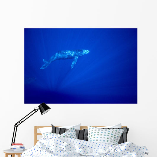 Blue Background Wall Mural