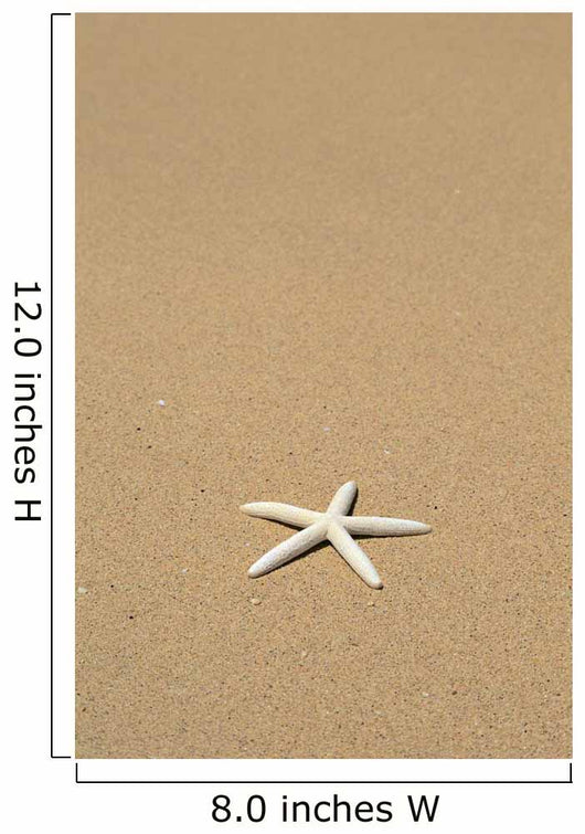 Side View Close-Up Of Single White Starfish On Sandy Beach Wall Mural