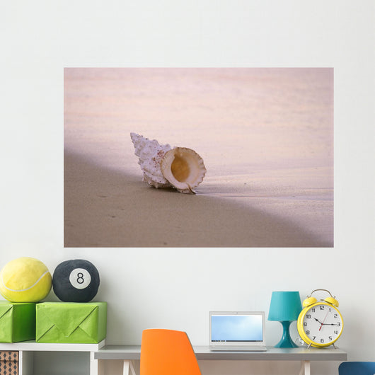 Hawaii, Detail Of Seashell Lying On Shoreline Beach At Dawn, Wet Sand Wall Mural