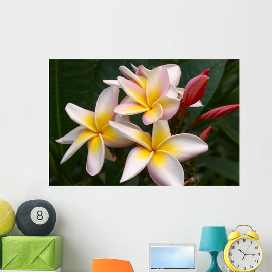 Soft Focus Of White Plumeria Flowers With Pale Yellow Centers Wall Mural