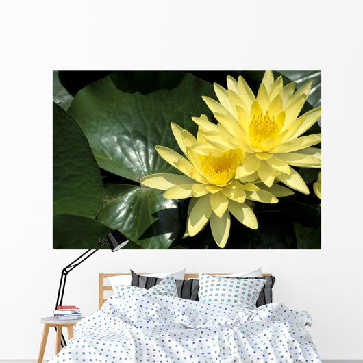 Two Yellow Water Lilies, Close-Up, Lily Pad Wall Mural