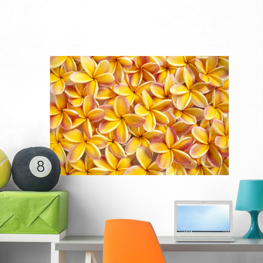 Close-Up Of A Bed Of Yellow Plumeria Flowers, Pink Tips, Water Drops Wall Mural