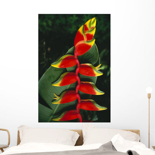 Detail Of Hanging Heliconia Against Leaf, Bright Contrasting Colors Wall Mural