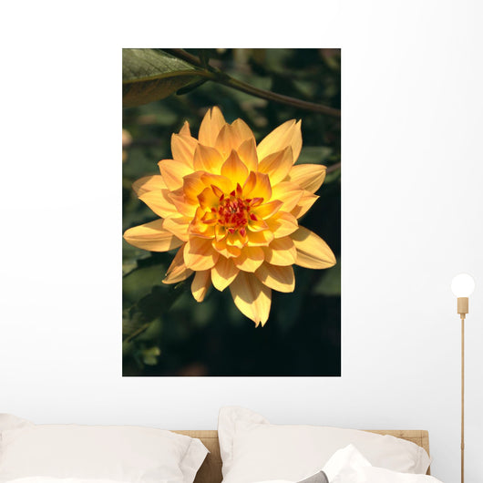 Close-Up Single Dahlia Flower Wall Mural